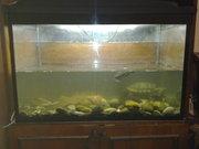 бескаркасный аквариум б/у 250 литров