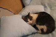 ООтдам кошку Тутту в хорошие руки
