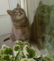 красивая ласковая упитанная кошка