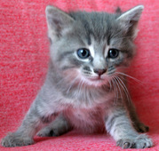 Котята даром в добрыe руки