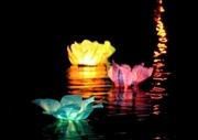 Водные фонарики – ЛИЛИИ в Казани