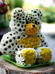 игрушки из живых цветов,  удивите своих любимых прекрасном подарком !!!