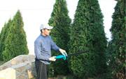 Обрезка деревьев в Казани