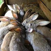 Комбикорм для кроликов П3К - 94