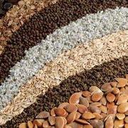 Викасмесь (вика,  пшеница,  ячмень)