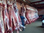Оптовая продажа мяса свинины,  говядины