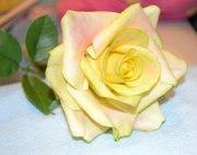 Мастер-класс по лепке королевы цветов – Розы из глины (холодный фарфор