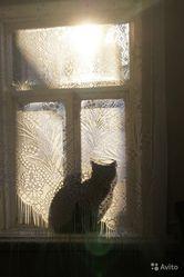 Зоопсихолог для кошки. Коррекция поведения кошки.
