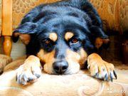 Решаем проблемы брошенных собак