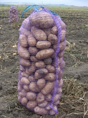 Картофель оптом от производителя по супер цене