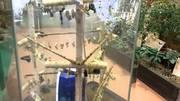 Высоко прпбыльный бизнес ферма Живых Экзотических Бабочек  из Индонезии
