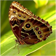 Высоко доходный  бизнес ферма Живых Восхитительных Бабочек  из Южной Америки