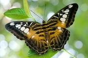 Высоко доходный  бизнес ферма Живых Тропических Бабочек  из Африки