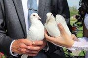 Белые голуби на выпуск для любых мероприятий Казань